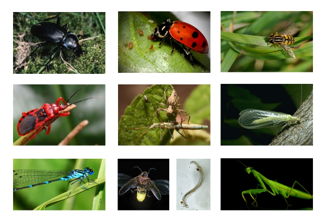 10 beneficial garden insects gardening for results