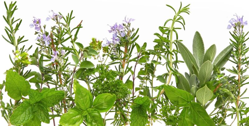 Grow The 5 Top Herbs In Hardiness Zones 3 To 10