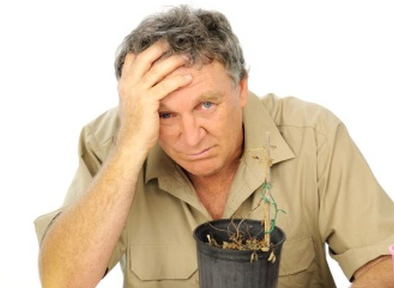 Learn To Avoid The Most Common Mistakes Made By Beginning Gardeners